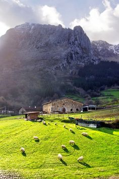 A typical basque country farmhouse with sheep in Atxondo valley by Mikel Martinez de Osaba on 500px