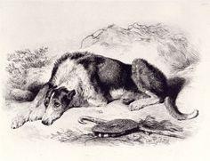 A Shepherd's Dog  Edwin Landseer, R.A. (1802-1873)