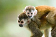 Los mejores padres del mundo animal: 5 machos que sí saben cuidar a sus crías - Mono Titi