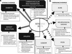 A Paoli, A Rubini, J S Volek y K A Grimaldi. Más allá de la pérdida de peso: una revisión de los usos terapéuticos de las dietas muy bajas en carbohidratos (cetogénica). European Journal of Clinical Nutrition (2013) 67, 789-796
