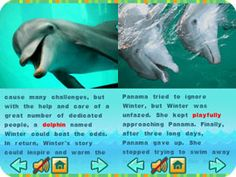 Dolphin Tale Unit from Scholastic - Virtual Field Trip to Florida aquarium, home of Winter the dolphin.