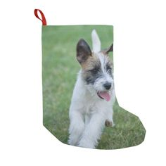 Shop jack russell terrier running small christmas stocking created by BreakoutTees. Custom Christmas Stockings, Personalized Stockings, Jack Russell Terrier, Mantle, Corgi, Christmas Sock, Xmas, Running, Prints