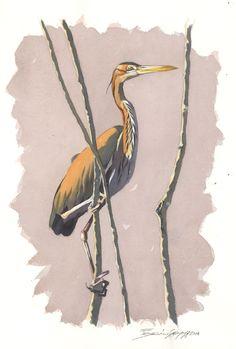 Federico Gemma - Wildlife Artist