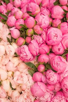 Pretty pink peonies in Paris. <3