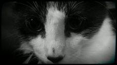 Kyô sweet baby kitten
