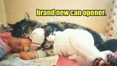 One More Can Opener, 10 More Cans of Food!