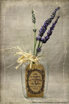 Simple Delights / Lavender