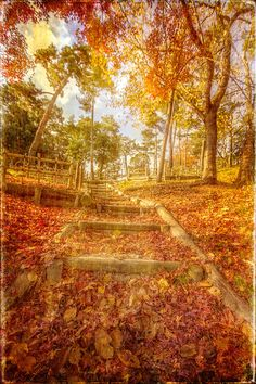 How enviable— Turning beautiful then falling maple leaves. —Shikou