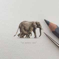 Day 72/100 (18/25 #freefridays) : The elephant's gestation period is 22 months – longer than any other land animal in the world, and a newborn elephant baby can weigh up to 260 pounds. - africageographic.com. 30 x 17 mm. SOLD. #potluck100pfa...