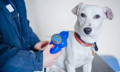 K9active.co.uk: Compulsory Microchipping – A Desperate Measure or Long Term Solution