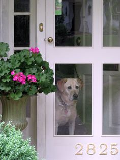 Oh so perfect for my dog. heirloom philosophy: The Language of Doors. Part I