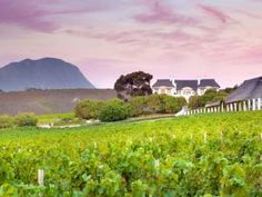 Visit the vineyards at Bouchard Finlayson and take a walk in the fynbos. Great Walks, Local Attractions, Time Out, Fine Wine, South Africa, Golf Courses, Vineyard, Walking, Wineries