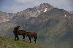 Resultado de imagen de caucaso paisaje