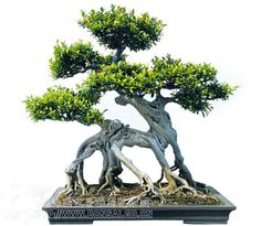 the art of bonsai tree