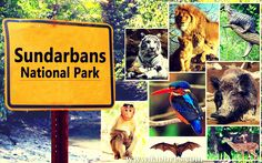 Sundarbans National Park - A Place to Visit