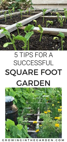 a Successful Square Foot Tips for a Successful Square Foot Garden DIY Pallet Cucumber Trellis Repurpose a wood pallet into a quick and sturdy DIY cucumber trelli. Cucumber Trellis, Home Vegetable Garden, Square Foot Gardening, Organic Gardening Tips, Organic Compost, Garden Pests, Gardening For Beginners, Shade Garden, Box Garden
