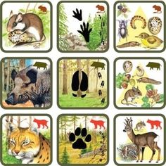 Pexetrio Plus: Savci Life Science, Science And Nature, Preschool Library, 4 Year Old Activities, File Folder Activities, Theme Nature, Montessori Practical Life, Forest Theme, Animal Habitats