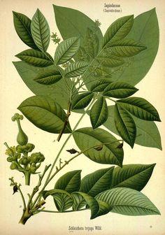 v.3 - Köhler's Medizinal-Pflanzen in naturgetreuen Abbildungen mit kurz erläuterndem Texte : - Biodiversity Heritage Library
