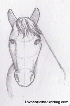 Draw a horse head tutorial - Easy and cartoon horse drawing tutorials - Horseback riding history - Learn How to Become a Trainer or How to Ride