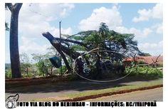 BLOG DE NOTÍCIAS DE MANOEL RIBAS E REGIÃO: Galho de Árvore cai sobre veículo na cidade de Iva...