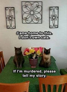 50 Best Funny Animal Memes