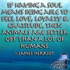 If Having A Soul Means Being Able To Feel Love, Loyalty & Gratitude, Then Animals Are Better Off Than A Lot Of Humans. - James Herriot