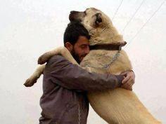... !!! on Pinterest | Kangal Dog, Anatolian Shepherd and Shepherd Dogs