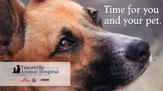 Time for you and your pet. | Tuscawilla Animal Hospital has veterinarians that care about cats and dogs too! Call us today to schedule an appointment. #veterinarymedicine #animalhospital Veterinary Medicine, Veterinarians, Schedule, Dog Cat, Pets, Animals, Timeline, Animales, Animaux