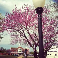 Stratton Taylor Library on a gorgeous spring day. Follow RSU on Instagram #rogersstateu