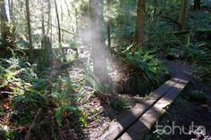 Tohula | Cougar Mountain Wilderness Creek Adventure (Issaquah)-5 mile loop.