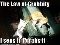 Album: funny-pictures-cat-grabs-tail