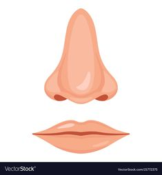 Human nose and mouth Royalty Free Vector Image Human Body Activities, Art Activities For Toddlers, Creative Mind Map, Body Parts Preschool, Illustrator Tutorials, Adobe Illustrator, Foto 3d, School Decorations, Diy Crafts