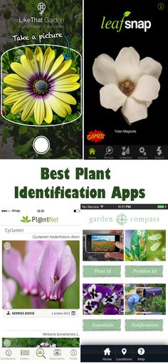 Identify unknown plant's within a minute. Read best free plant identification apps that identify plants using camera. #gardening #dan330 http://livedan330.com/2015/05/19/the-best-plant-identification-apps/
