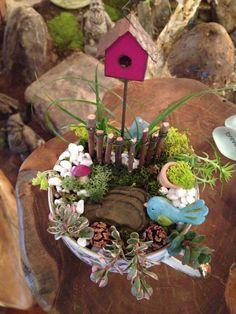 Miniature teacup garden!