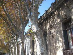 Buenos Aires / Chacarita