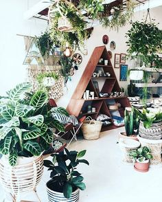 Weekends are for plant shopping, like at the fabulous @nikau.store in Byron Bay, Australia!  :@mrjasongrant at @nikau.store #urbanjunglebloggers
