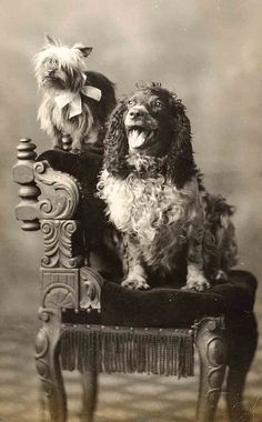 Vintage photo two dogs sitting