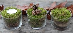 Herbstliche Dekoration - Moos im Glas