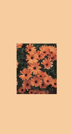 Aesthetic Desktop Wallpaper, Mood Wallpaper, Graphic Wallpaper, Colorful Wallpaper, Cartoon Wallpaper Iphone, Flower Phone Wallpaper, Iphone Background Wallpaper, Photo Deco, Sunflower Wallpaper
