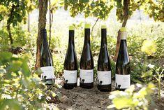 Weingut Pflüger - Pfalz