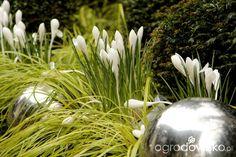 Ogród nie tylko bukszpanowy - część III - strona 949 - Forum ogrodnicze - Ogrodowisko