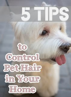 5 Tips to Control Pet Hair in Your Home