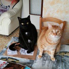 Calimero e Anacleto
