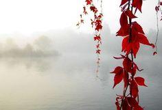 осень, листья, красные, тумен