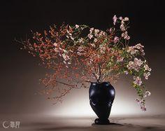 うめもどきの暴れた表情を面的に出し、乱れ菊をそこにかかわらせていきます。秋風を感じさせるような動きを出したいと、花の風情や実の色気に注目しました。花材:うめもどき、乱れ菊 花器:ガラス花器(岩田久利) The autumn-like lyricism and colors of fruits image the movement of autumnal breezes. Chrysanthemum is interspersed throughout the flamboyant expression of Japanese winterberry. Material:Japanese winterberry, Chrysanthemum Container:Glass vase #ikebana #sogetsu