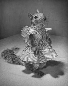 tommy tucker, squirrel (live squirrel). Life magazine, 1940s