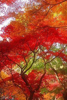 ~ Autumn Color Concerto ~ by #picnic #prepare for picnic #company picnic