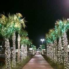 there's just something about lights on palm trees that make me so happy