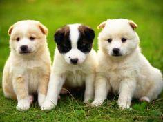 imagenes de protector de pantalla para celular de perritos