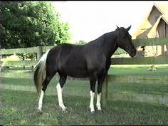 I want a horse with socks like that!    http://www.bootsandlace.com/images/horses/Manaceta1.JPG